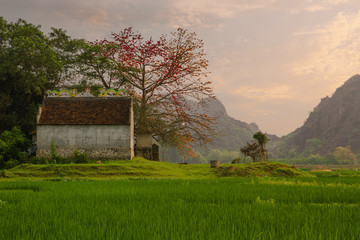Typical landscape of Vietnam village