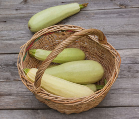 Harvest vegetable marrows in a basket