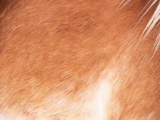 Horse detail 179