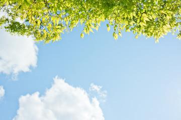 けやきの新緑と青空と雲