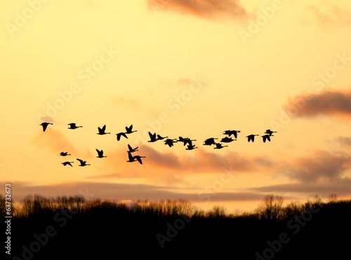 Canadian Geese Flying into the Sunset