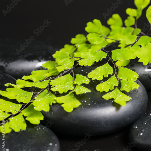 Spa concept with green branch of maidenhair and zen stones with