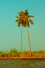 Beautiful view at tropical beach with palm trees. Seascape in vi