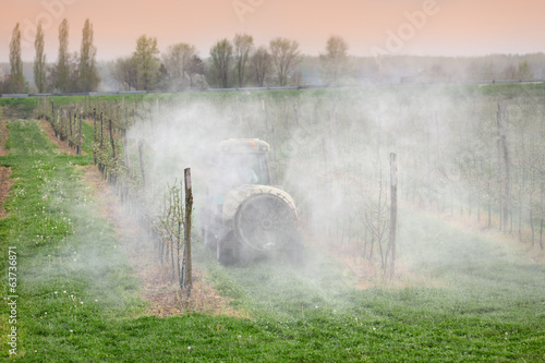 Agriculture, spraying of apple trees in orchard with insecticide