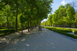 Avenue with statues in the Retiro Park in Madrid