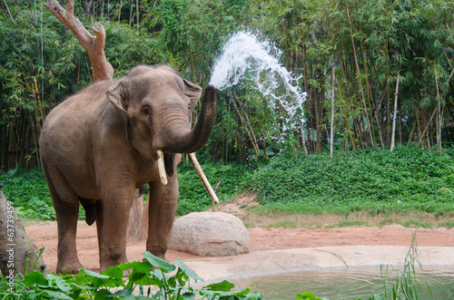 Tuinposter Olifant Elephant make water spray - Nature shower