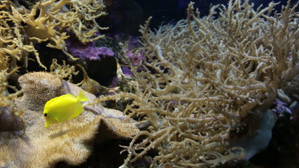 Marine fishes swim under water