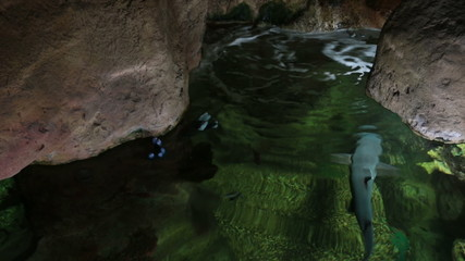 Underwater cave with a floating fishes at the surface