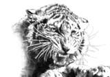 tiger power art illustration - 63749008
