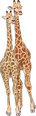 vector giraffes