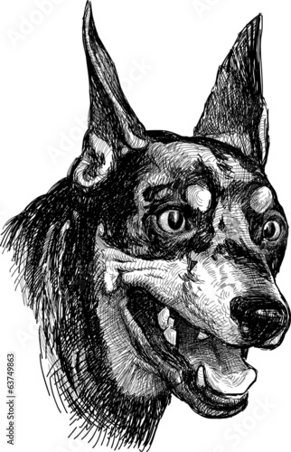 portrait of doberman pinscher