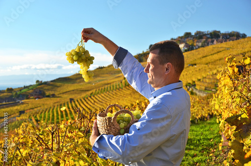 Man holding a basket of grapes. Lavaux region, Switzerland