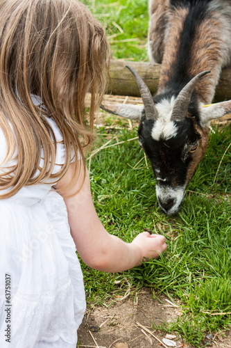 Girl Feeding Goat (Near)