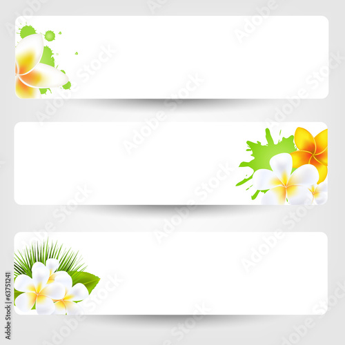Banners With Flowers Frangipani