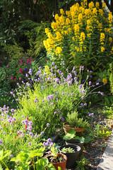 Lovely flowers in the garden