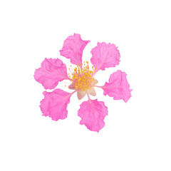 Lagerstroemia macrocarpa isolated on white background