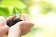 Hands holding sapling with soil on green natural background