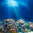 Leinwanddruck Bild - Sea or ocean underwater coral reef snorkeling or diving backgrou