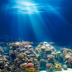 Sea or ocean underwater coral reef snorkeling or diving backgrou