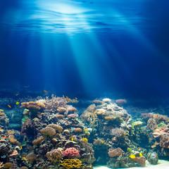 Sea or ocean underwater coral reef snorkeling or diving backgrou