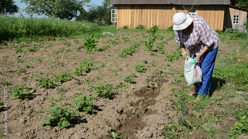 farmer goes barefoot bed scatters fertilizer on seedling