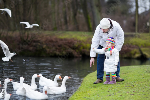 Happy young father and his toddler daughter feeding white gooses