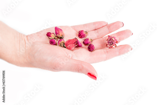 hand with pink buds, spa theme