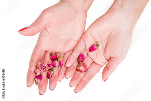Women's hands holding pink buds, spa theme