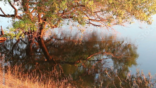 Tree and grass reflection in water in late afternoon light