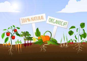 Vegetable garden poster