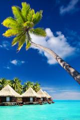 Palm tree on Moorea Island hanging over lagoon