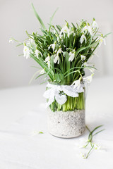 Beautiful snowdrop flowers in transparent vase with lace ribbon