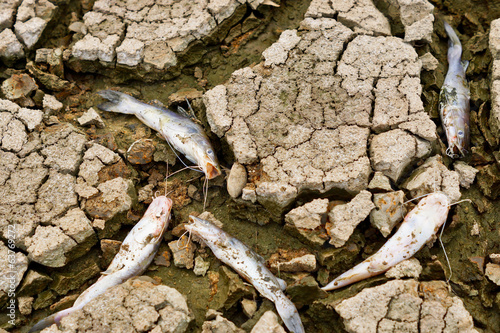fish died on cracked earth / drought / river dried up