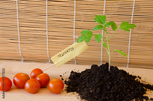 tomato plant and vegetable with paper card word
