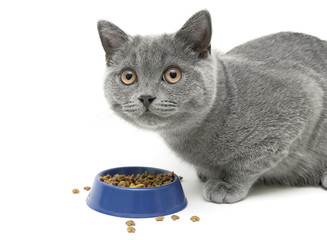 Kitten eating cat food on white background