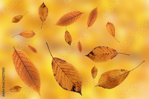 leaves falling on ground over autumn background