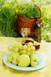 Snack picnic