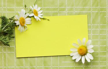 daisies on a postcard