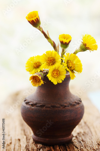 coltsfoot in the vase