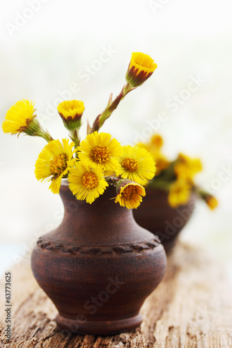 coltsfoot in ceramic vase
