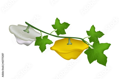Two Pattypan Squash Plant on White Background