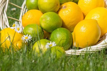 Zitronen und Limetten in einem Korb