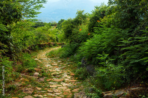 Stone Path through Wilderness