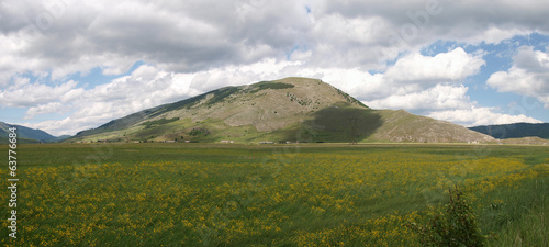 panorama landscape of flowery plain
