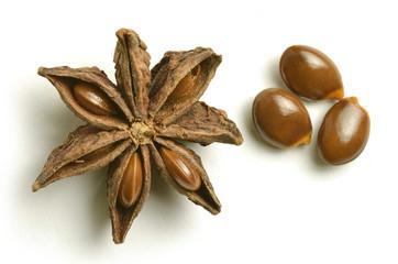 Illicium verum Star anise चक्रफूल 팔각