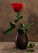 Red rose in a vase