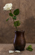 White rose in a vase