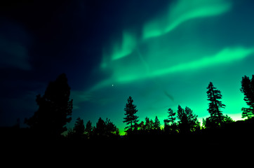 Northern Lights over trees