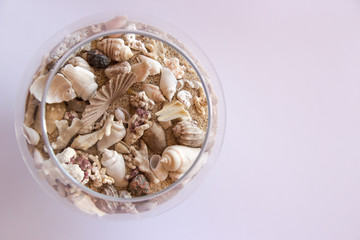 sand and shells in a glass on white background