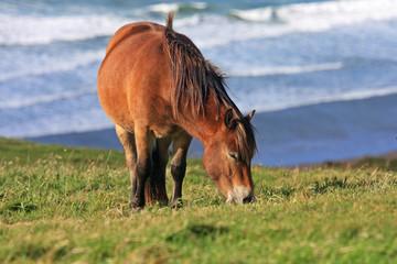 wild pony
